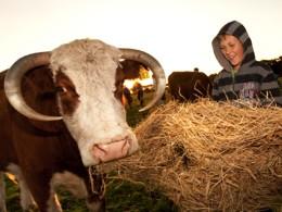 Boy with cow on the farm